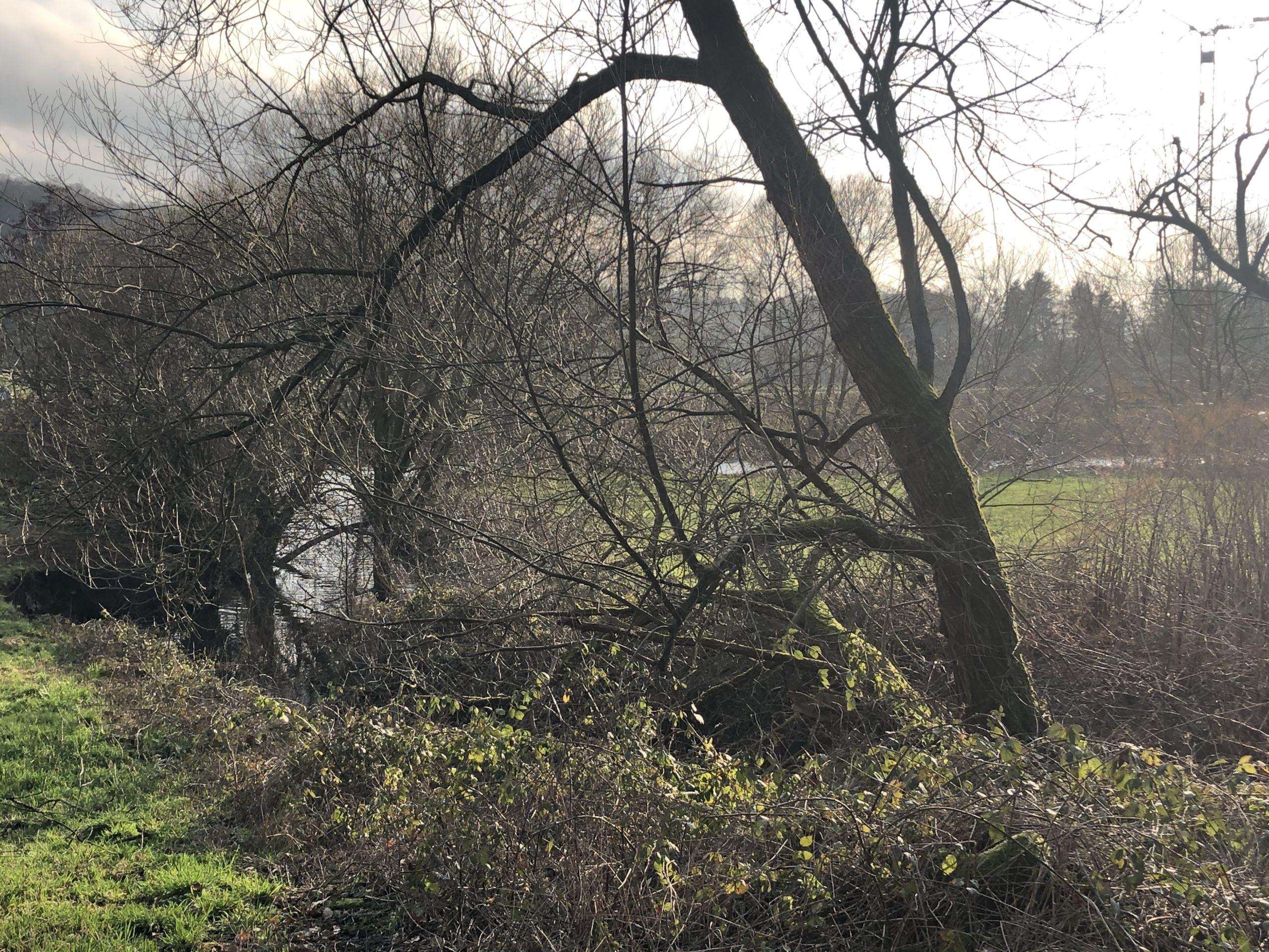 Die Mündung des Nacker Bachs in die Wupper